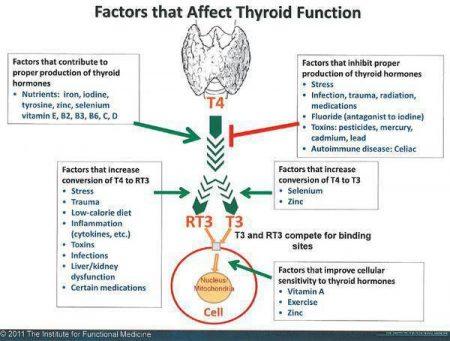 Thyroid hormones