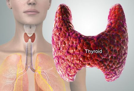 Thyroid Gland
